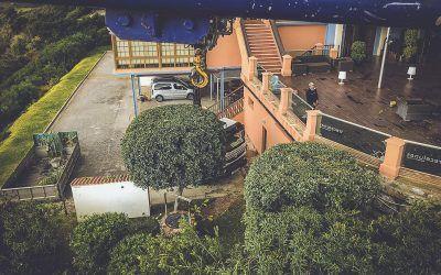 Pinsapo Garden realiza un exhaustivo trabajo de poda sobre un gran ejemplar de Ficus.