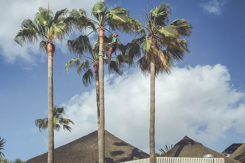 jardinería-málaga-costa-del-sol