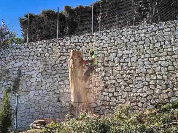 Tala y poda en altura - Un Operario o jardinero de Pinsapo Garden trabajando en un gran ejemplar de eucalipto en Benalmádena, Málaga.